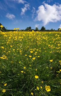 summer meadow by meirion matthias