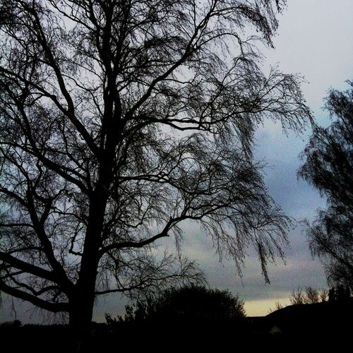 Bare-trees-i
