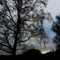 Bare Tree - Sunset by Ursula Wolfangel-Hoppmann