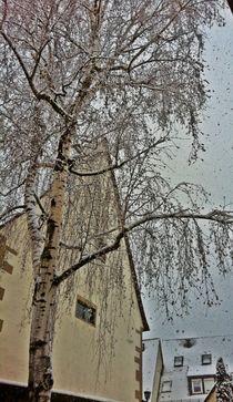 Birke im Winter von Ursula Wolfangel-Hoppmann