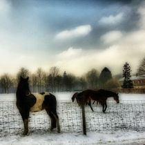 Winter - Pferdekoppel von Ursula Wolfangel-Hoppmann