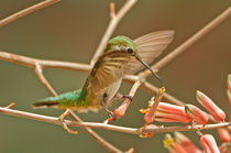 Hummingbird Delight by Barbara Magnuson & Larry Kimball