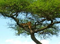 Baumlöwe von Bettina Breuer