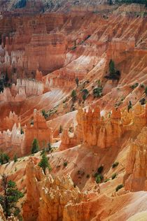Bryce Canyon by usaexplorer