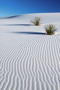 White Dunes by usaexplorer