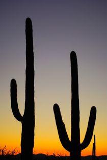 Saguaro NP von usaexplorer