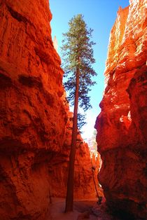 Wall Street - Bryce Canyon von usaexplorer