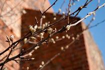 springtime von olga-glowacka