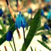 Glockenblumen von tinadefortunata