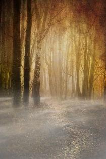 spooky misty woodland by meirion matthias