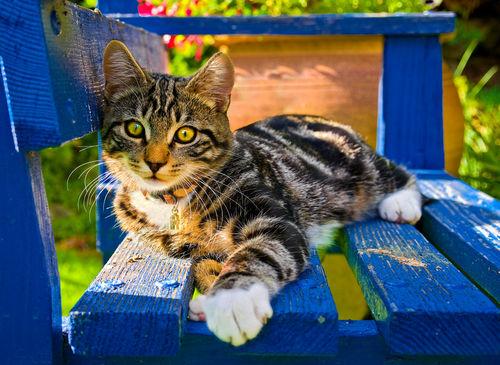 Kitten-on-benchbigger