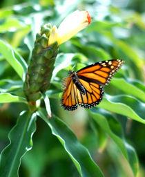 Nectar by Doug Graham