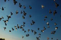 Flock - Schwarm von Doug Graham