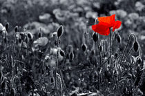 Lest we Forget by serenityphotography
