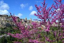 Sizilien, Ragusa Ibla von sandarine