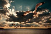 gulls in grunge style by meirion matthias
