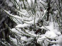 Fantasy Snowfall by Sandra Woods