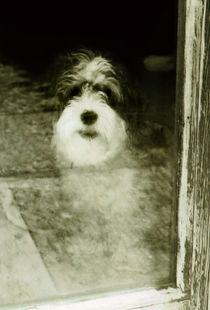 Salty Dog von Mary Rath
