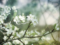 plum flowers by Franziska Rullert