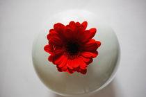 Red Gerbera In White Vase by inkedsandra