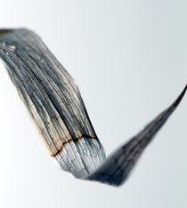 vertrocknetes Blatt by Jens Berger