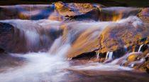 Golden Water by Maciej Markiewicz