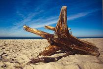 Stumpen am Strand von dresdner