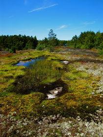 Frühling in Finnland von Veit Schuetz