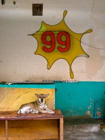 Hund 99, Phnom Penh von Veit Schuetz