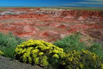 Painted Desert - Arizona von usaexplorer