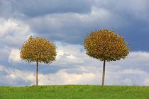 'Frühlingsbäume' von Wolfgang Dufner