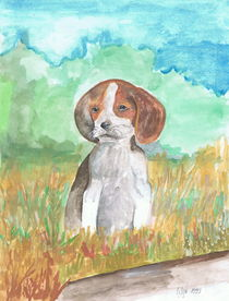 Ein Beagle Welpe im Feld by Lidija Kämpf