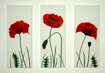 Ansicht von 3 Mohnblumen aus der Galerie von Lidija Kämpf