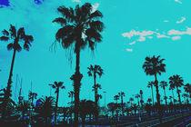 Barcelona-palms