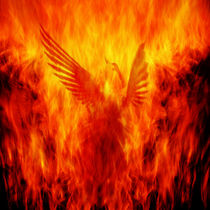 Phoenix Rising von Andrew Paranavitana