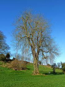 Stately Tree von John McCoubrey