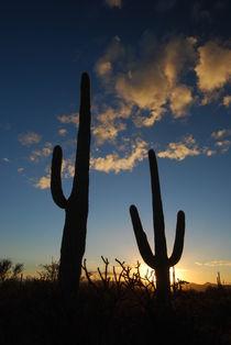 Sonnenuntergang Arizona von usaexplorer