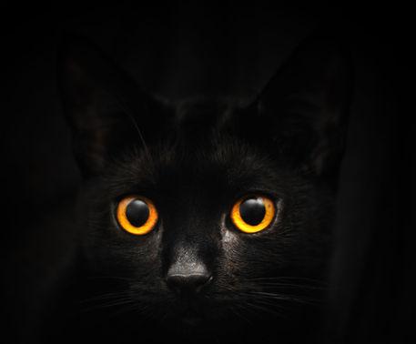 Joey-lawrence-cat-eyes