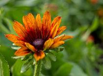 Joey-lawrence-orange