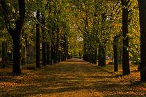 Late walk by József Lörincz