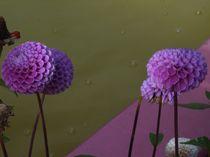 rosa Bälle von Ella 2000