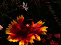 Floral von Ella 2000