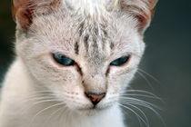 Katze von Jens Berger