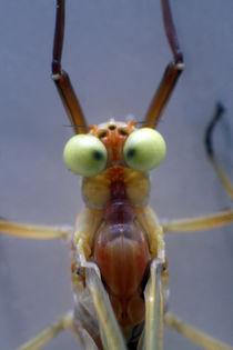 Verrücktes Insekt by Jens Berger