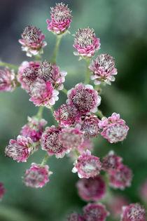 Blüten by Jens Berger