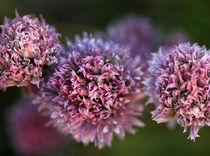 Blumenbild von Jens Berger