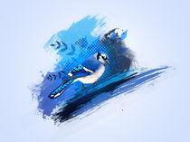 Blue jay by Daan Janssen