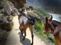 strolling donkeys by Monika Ashwin Vasuki