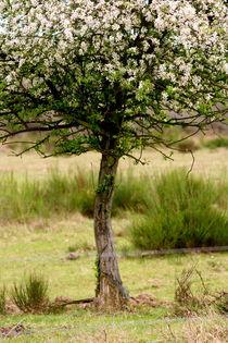 Obstbäumchen by © Ivonne Wentzler