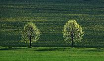 Bäume im Licht by Wolfgang Dufner